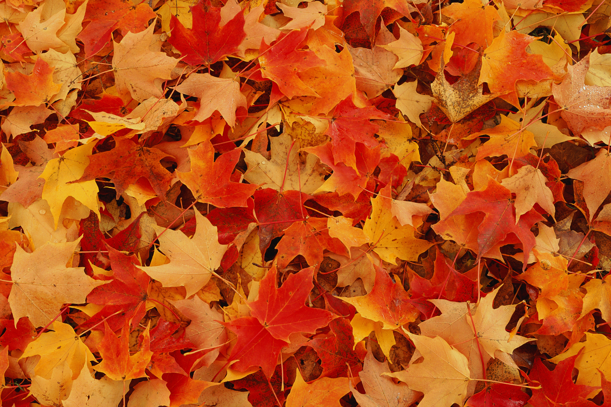 Green Living And Fall Colors What To Do With All Those Leaves