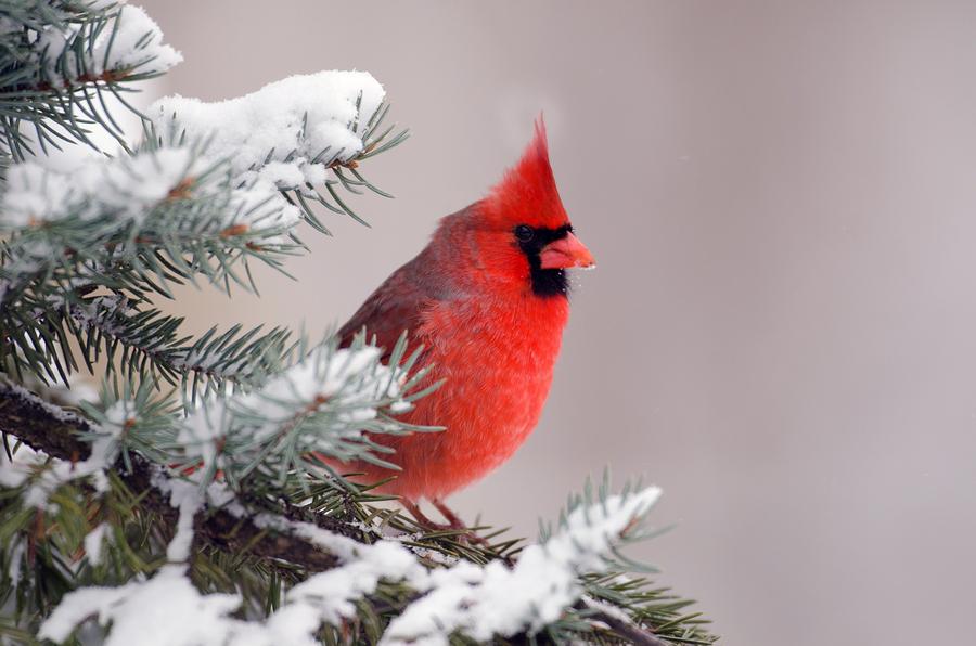 Providing Winter Habitat For Backyard Animals