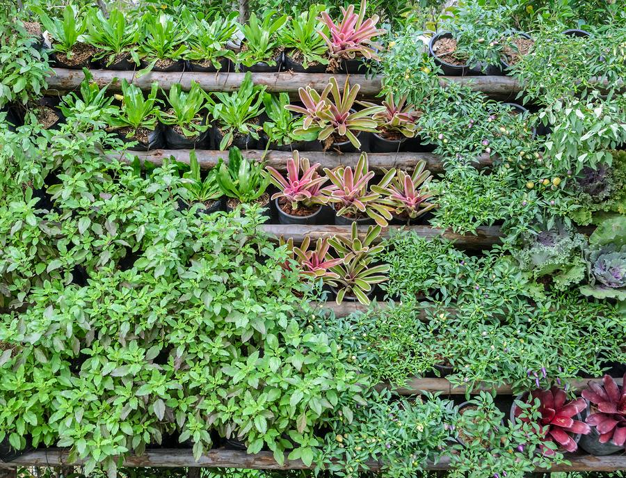 Vertical gardening tips