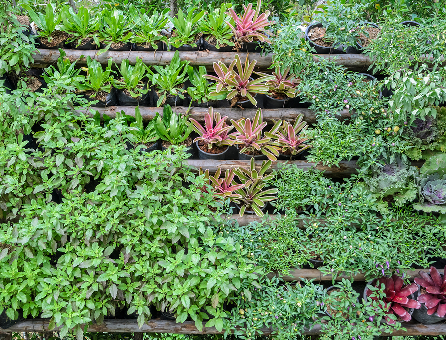 Vertical Gardening Tips And Tricks For Green Living