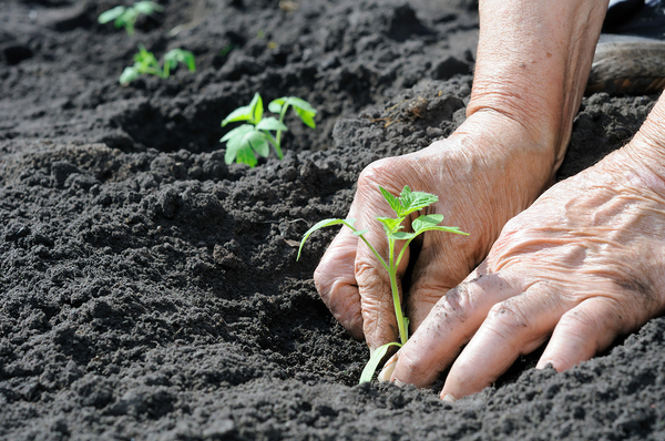 How To Grow Vegetables In A Drought