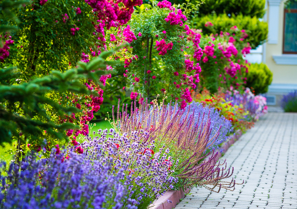 Preventative Medicine For Your Home And Garden This Year
