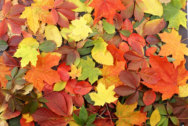 Top 10 Things To Do With Fall Leaves