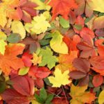 Various colored fall leaves in a pile on the ground.