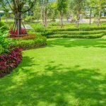 Beautiful green lawn with bushes along a border.